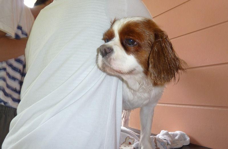犬連れ旅行 おでかけ おすすめ 伊豆 下田 ドッグリゾート Frou Frou フルフル まちろブログ 犬 伊豆 ペット