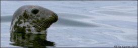 Thimble Island Seal Watch Cruises