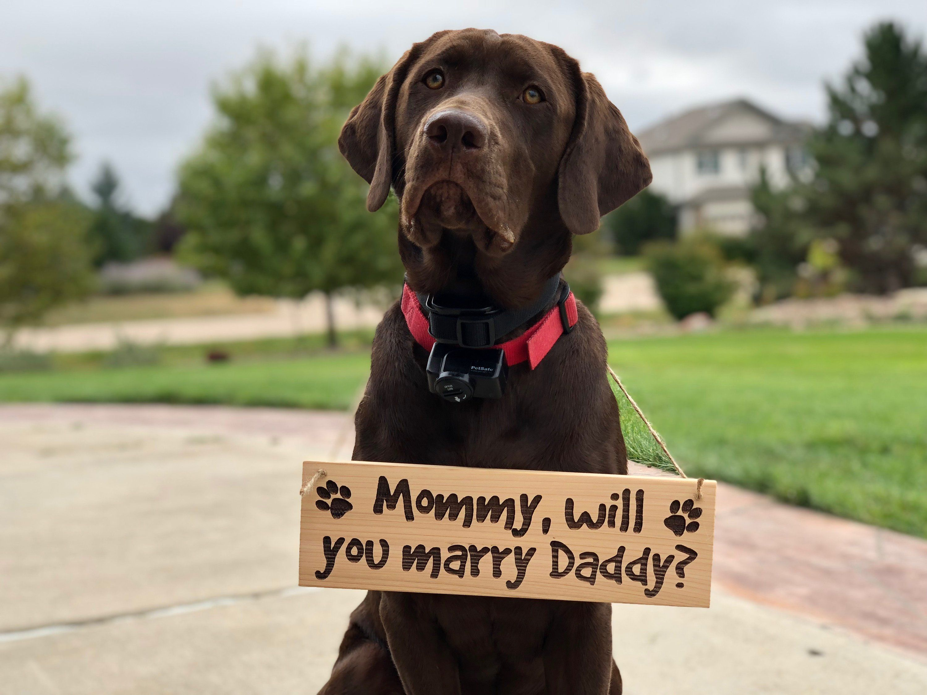 Wooden Dog Engagement Sign Proposal Sign Handmade Personalized