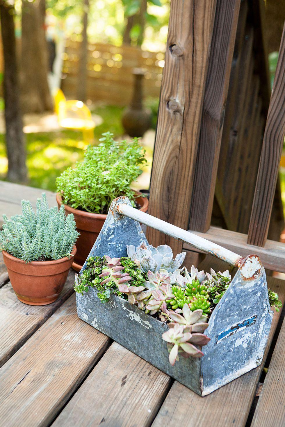 25725207b8b15886d8d675c6e7544e9e - What Type Plants Are Suitable For Micro Gardening