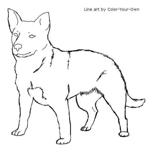 Australian Cattle Dog Line Art Dog Line Art Dog Coloring Page