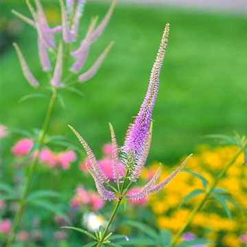 15 Native Plants For The Midwestern Garden Garden Plants Sun