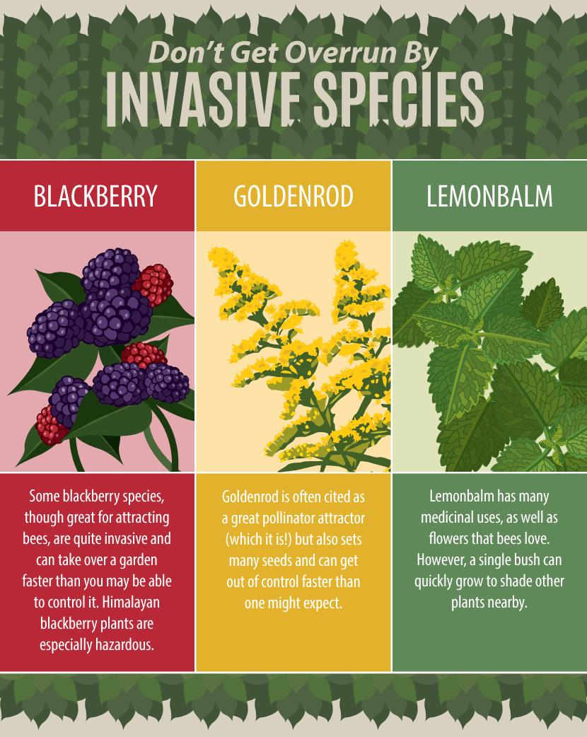 Creating A Pollinator Friendly Garden Edible Garden 400 x 300