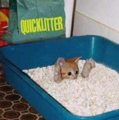 quicklitter.