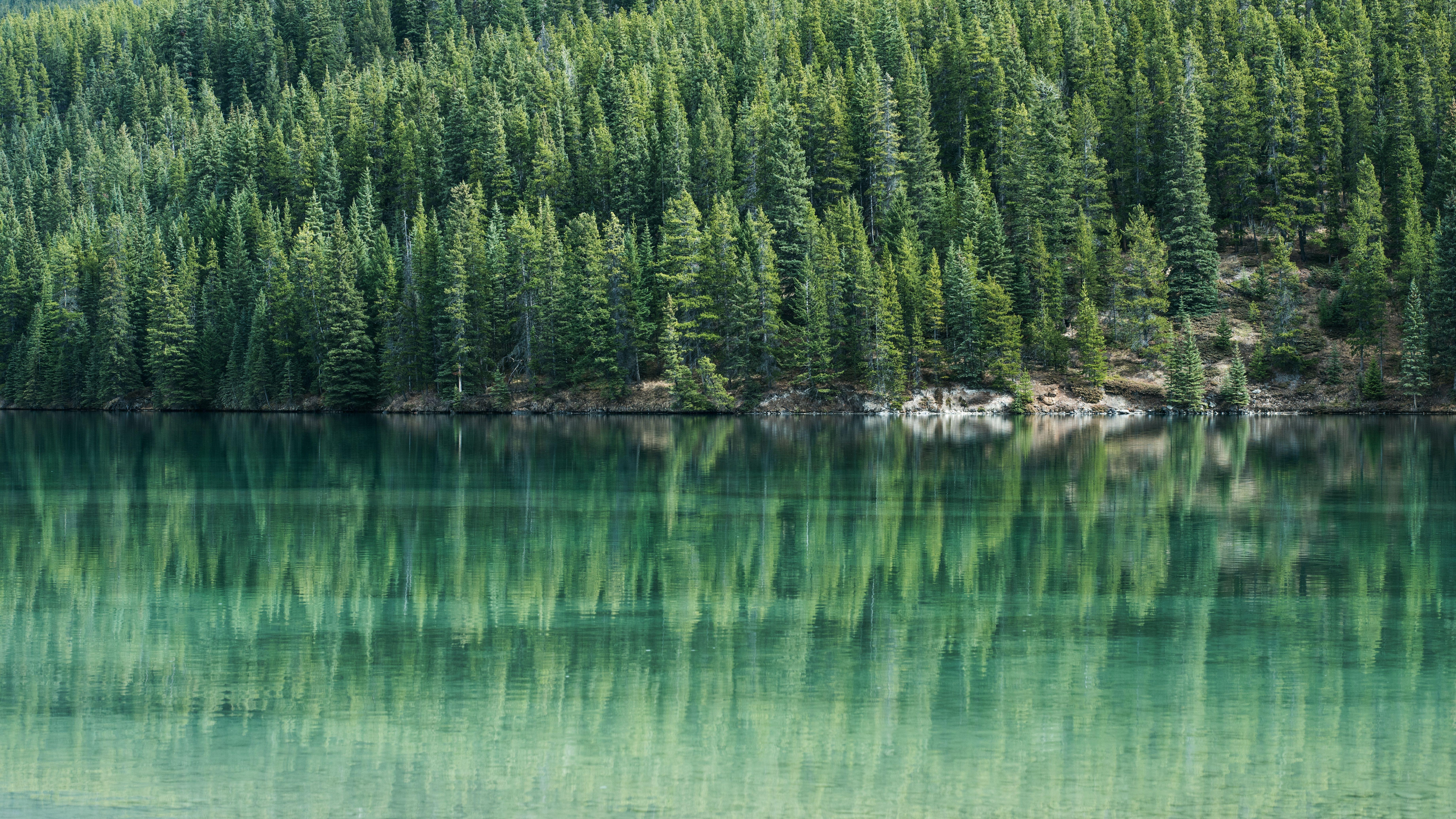HD Wallpaper A Wooded Shore Seen Across An Emerald Green Lake In Banff