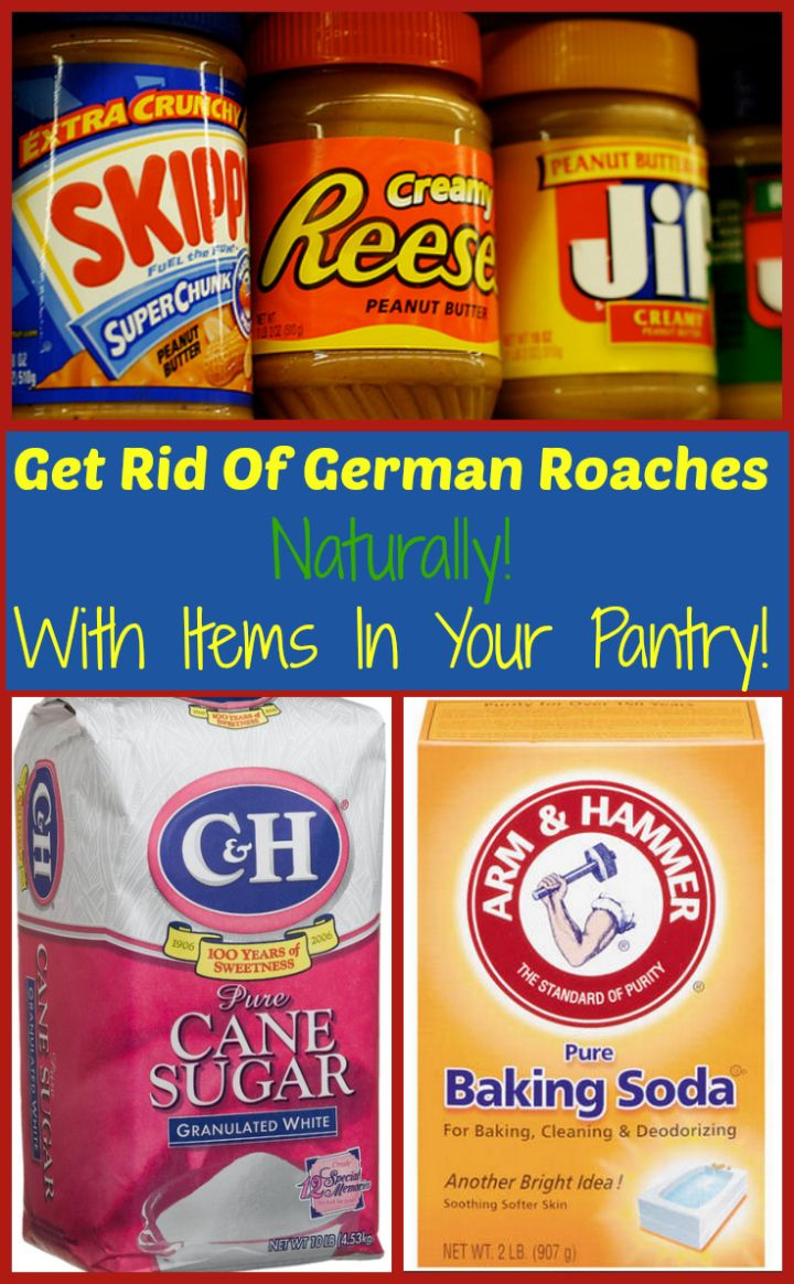 Get rid of german roaches naturally roaches home