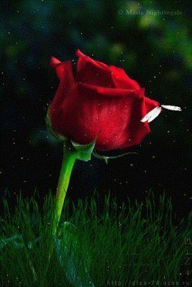 Good morning | good morning | Good morning love, Roses gif, Flowers gif