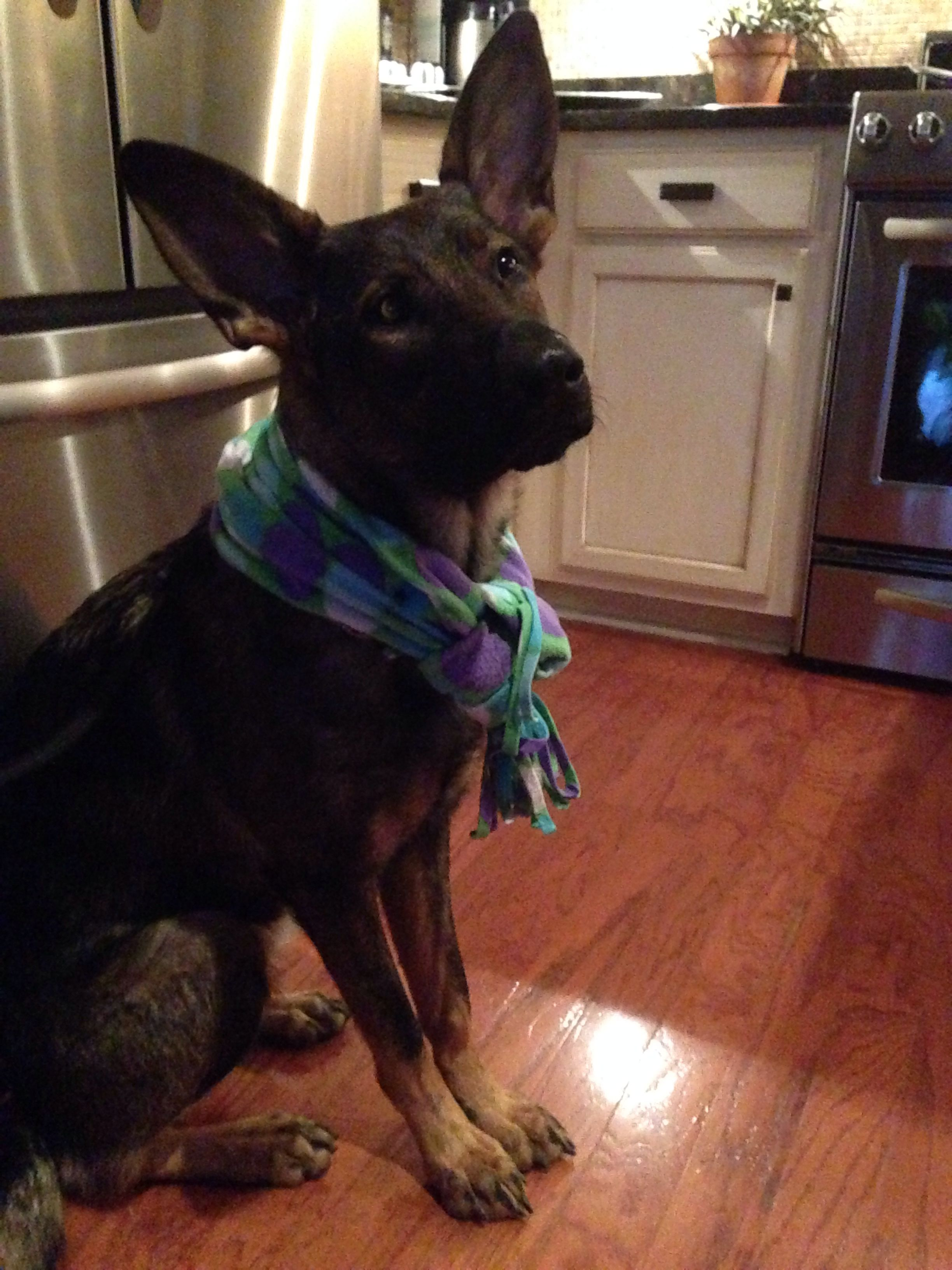 Millie trying to bundle up.....South Carolina people are not built for anything under 50 degrees and 50 is pushing it!