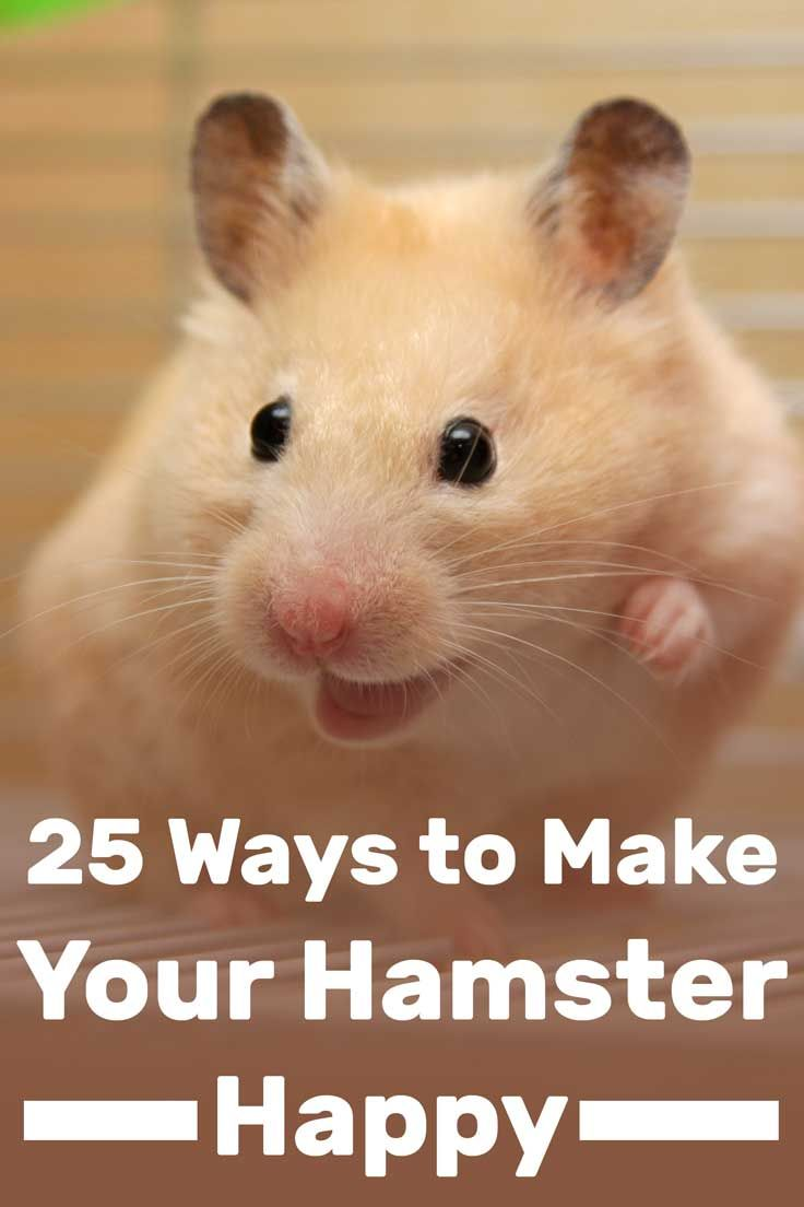 25 Ways to Make Your Hamster Happy Hamster care