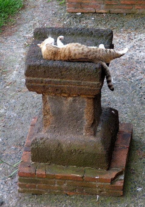 """Cats never strike a pose that isn't photogenic."" - Lillian Jackson Braun"