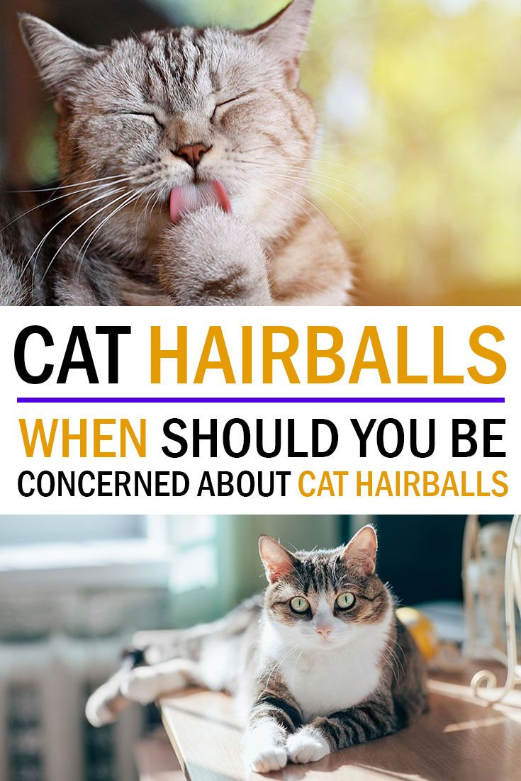 Ask The Vet Are Hairballs A Serious Problem Cats Animals Meant To Be
