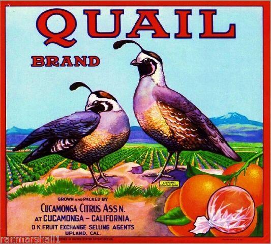 Rancho Cucamonga Upland Quail Orange Citrus Fruit Crate Box Label Art Print