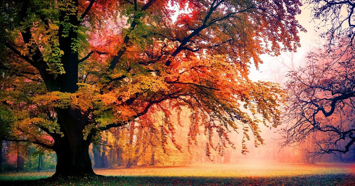 17 Autumn Wallpaper Ultra Hd 71 Autumn Tree Wallpapers On Wallpaperplay 5k Autumn Hd Wallpaper In 2020 Scenery Wallpaper Autumn Leaves Wallpaper Tree Road Wallpaper