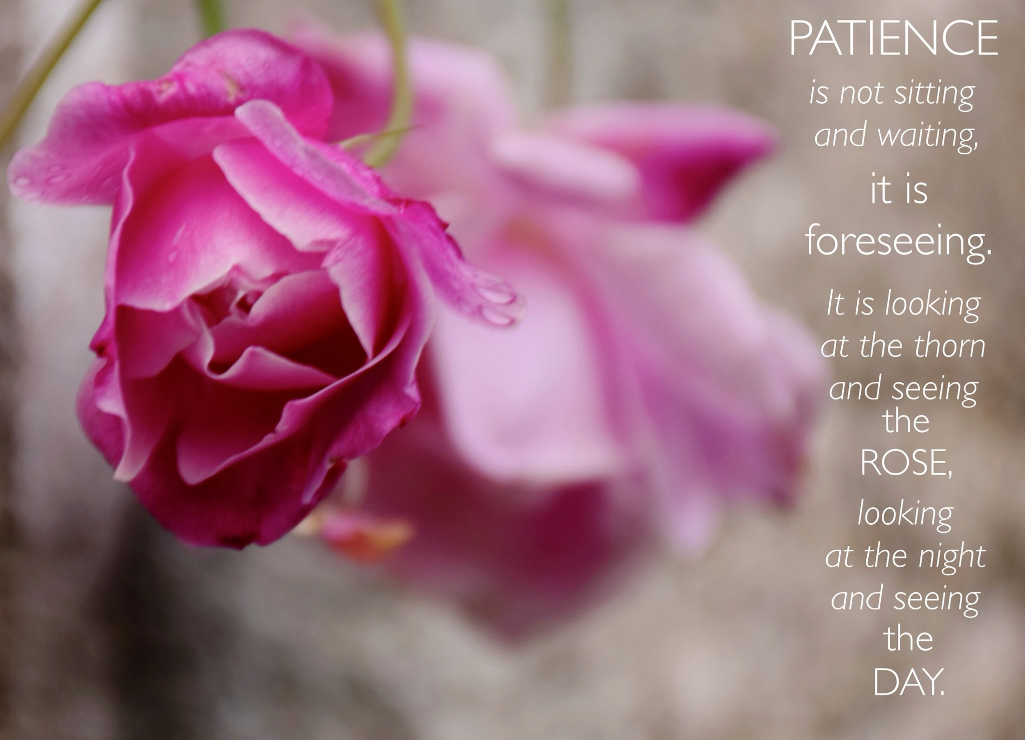 Rumi quote on PATIENCE. Stephanie Rowcliffe Photography ...