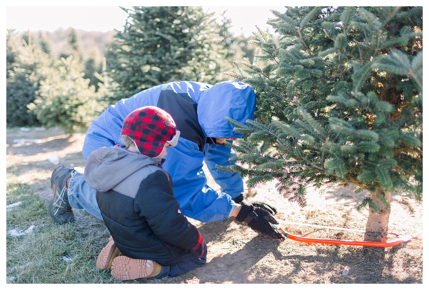 The Helgesons With Images Tree Farms Romantic Images