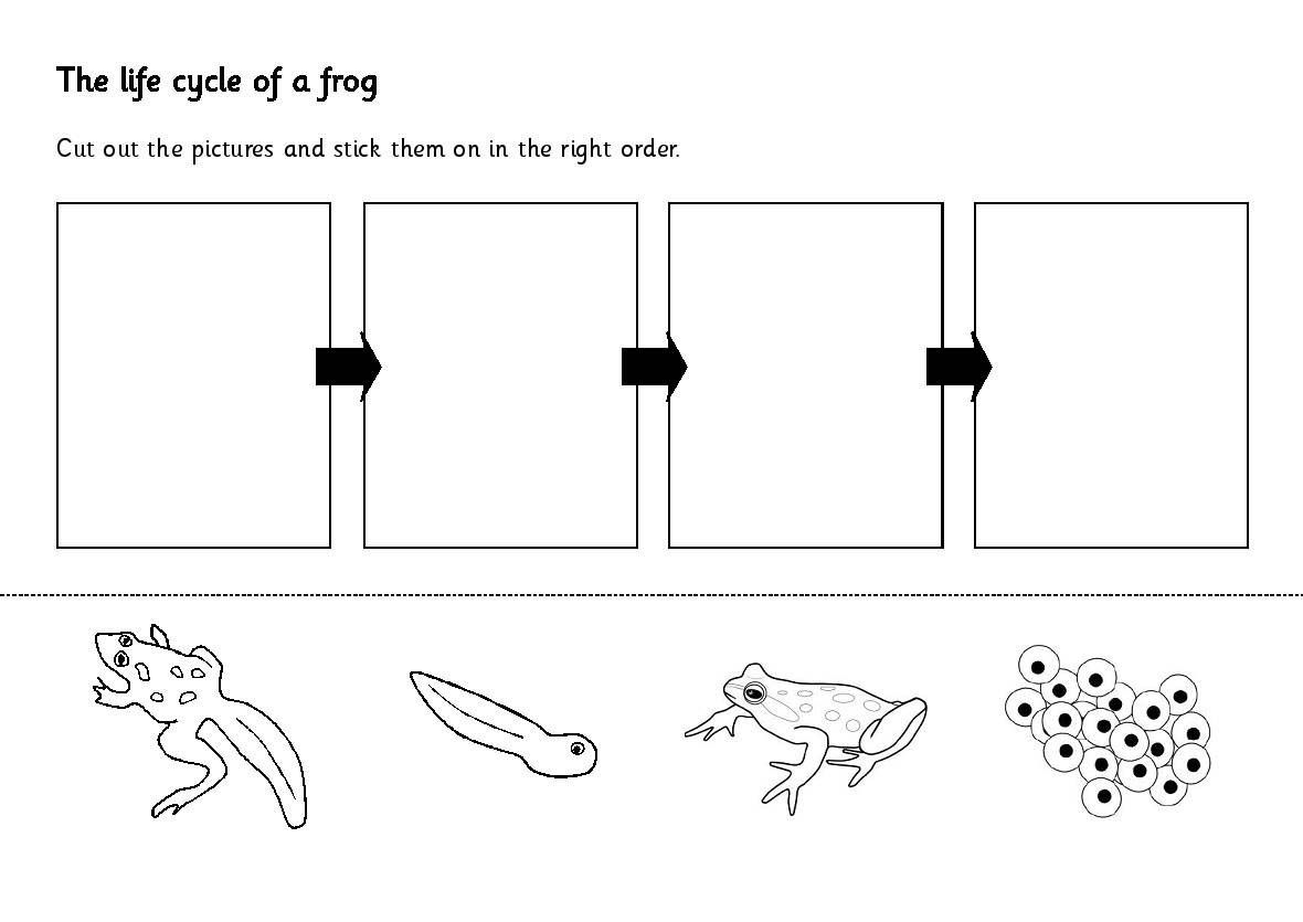 Frog Worksheets For Kindergarten