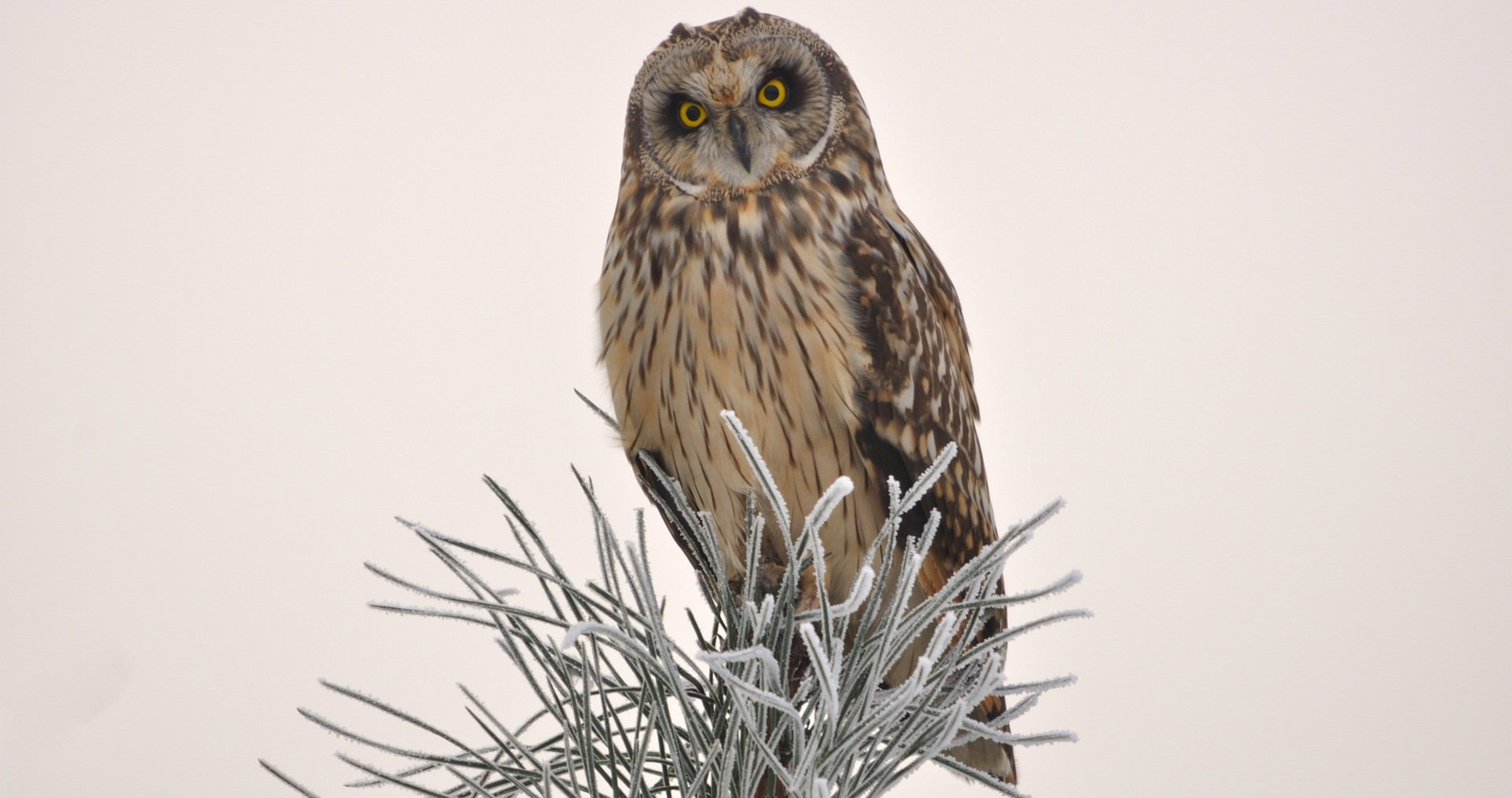 bird owl on tree wallpaper 4k ultra hd wallpaper Owl