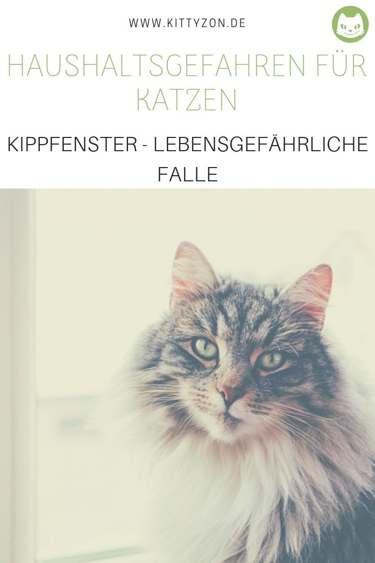 Haushaltsgefahr Fur Katzen Kippfenster Lebensgefahrliche Falle