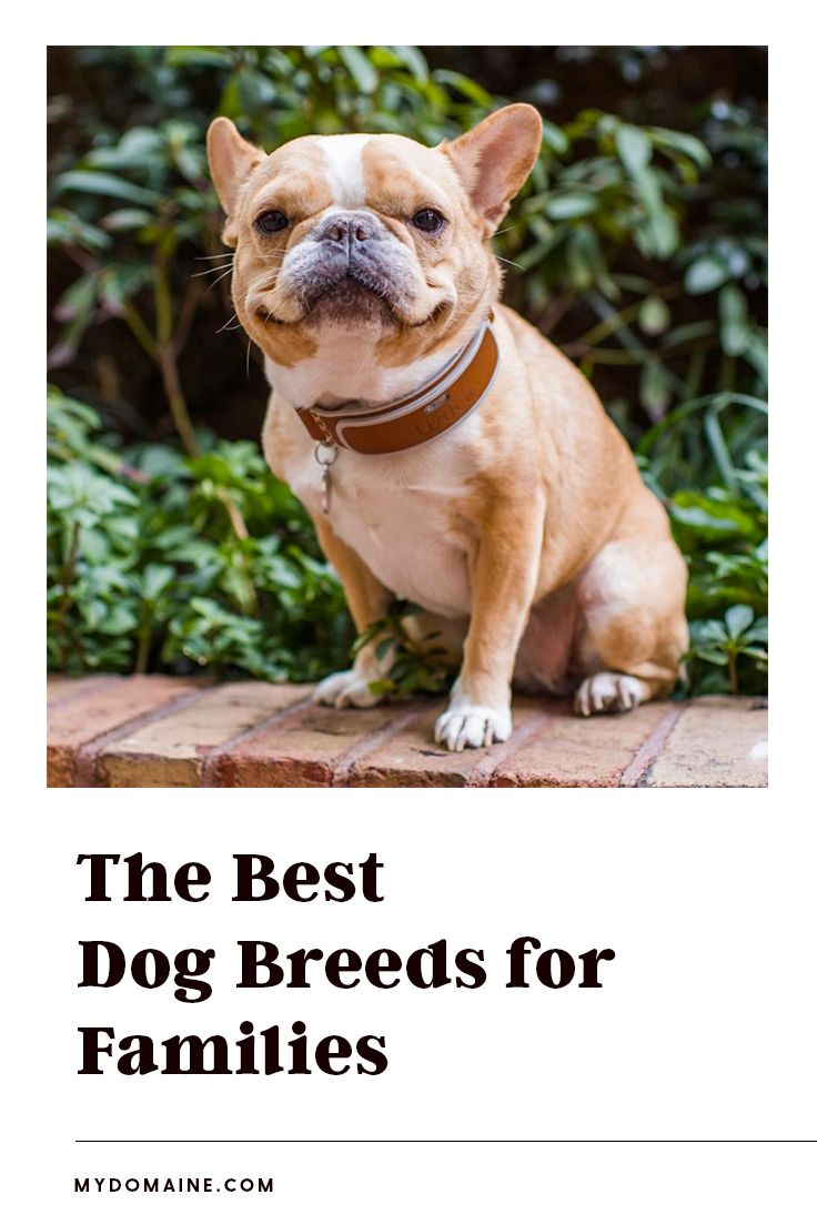 The Top 10 Calmest Dog Breeds Perfect For People With Kids Calm