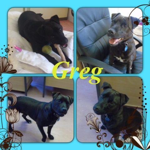 YORK RSPCA ANIMAL HOME Greg Dog adoption, Dogs, Animals