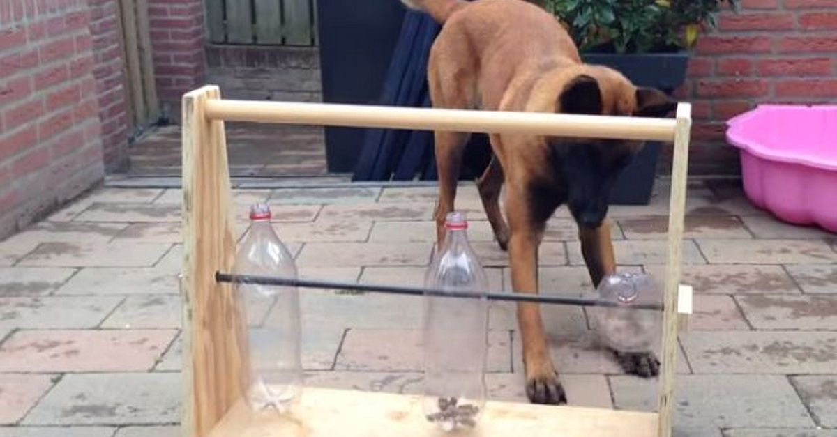 He Built The Greatest Toy For His Dog Wow What An Awesome Idea Diy Dog Stuff Diy Dog Toys Dog Boredom