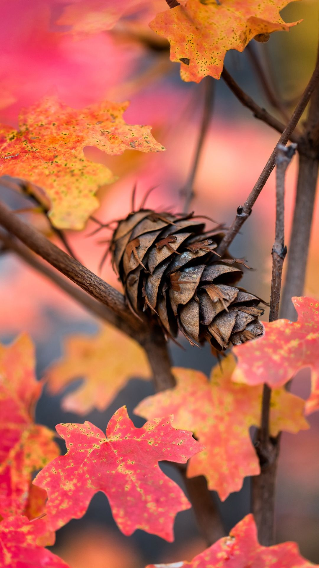 Hd wallpaper for j7 prime - Art Nature Wallpaper For Samsung Galaxy J7 Prime Background Pinecone And Autumn Leaves