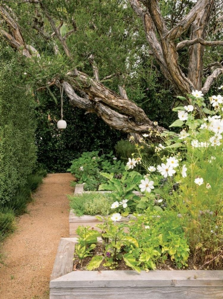 Steingarten  Anlegen Gartengestaltung Kies Splitt Alleen Begruenung Hochbeete Baeume