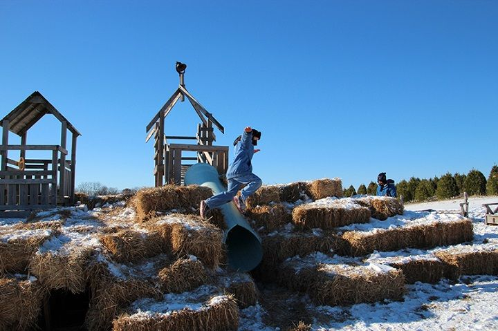 Hanns Christmas Tree Farm. Oregon, Wisconsin | Best Things WI.com ...