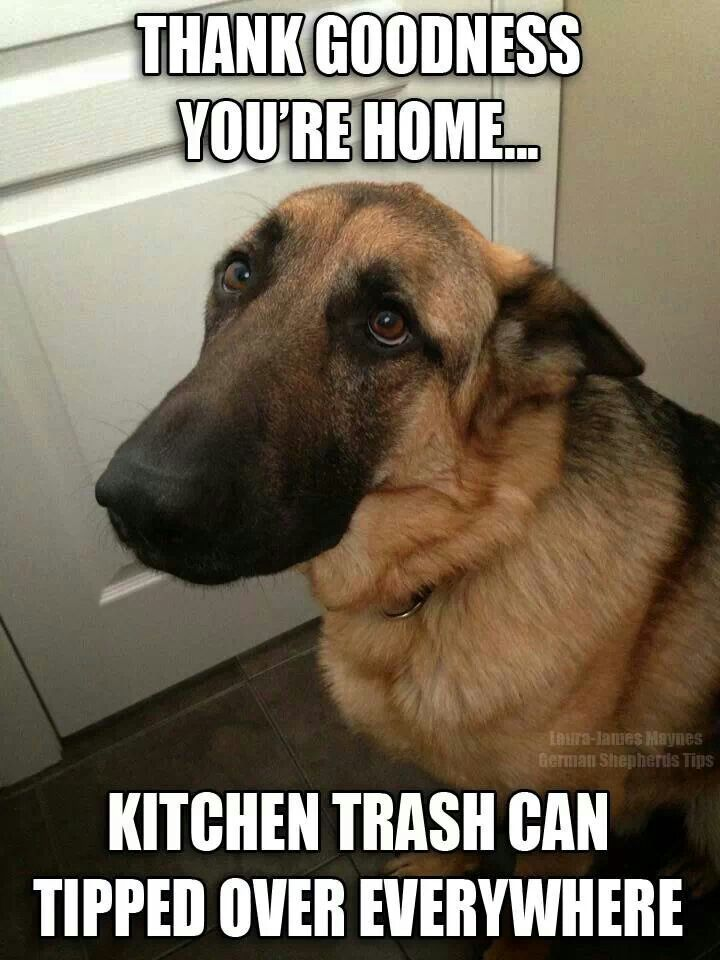 33 All Time Best Funny Dog Pictures With Captions With Images
