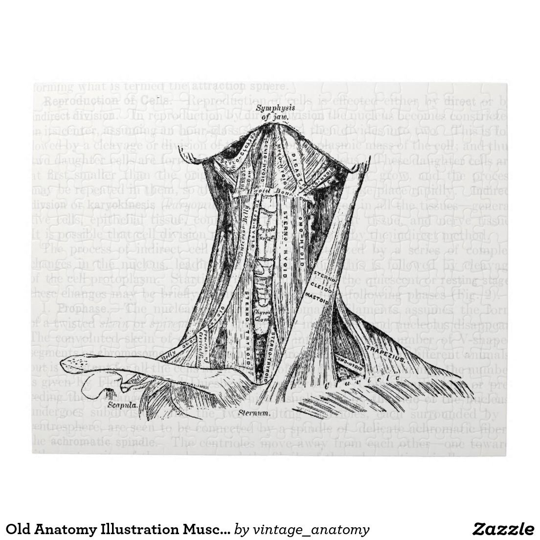 Old Anatomy Illustration Muscles Of The Neck Jigsaw Puzzle | Jigsaw ...