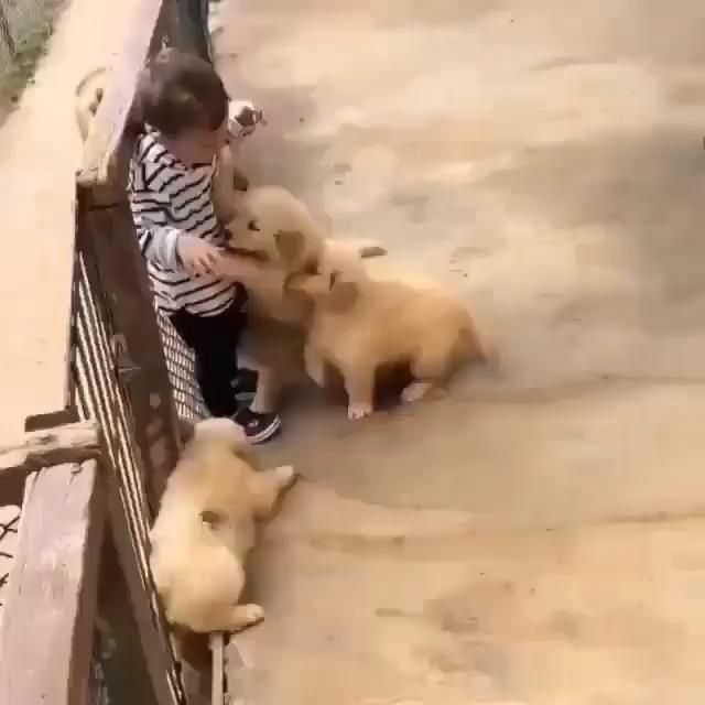 We Want To Play All Day Video In 2021 Cute Baby Animals Cute Animal Videos Dogs