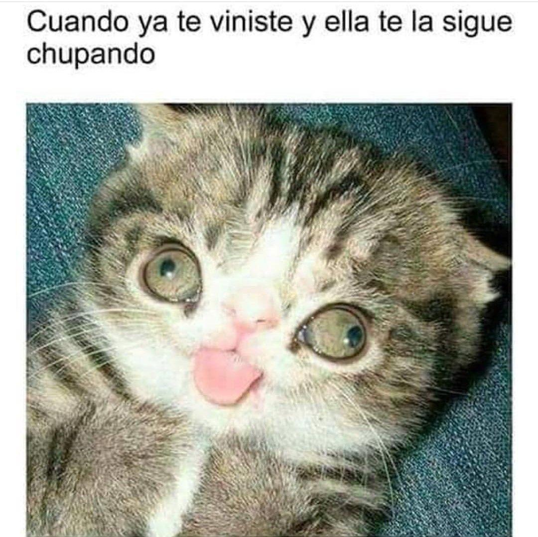 Cat Paw Meme 25 Best Cat Paws Memes Paws Memes Beans Memes Pawe ...
