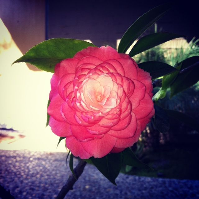 beautiful bloom!
