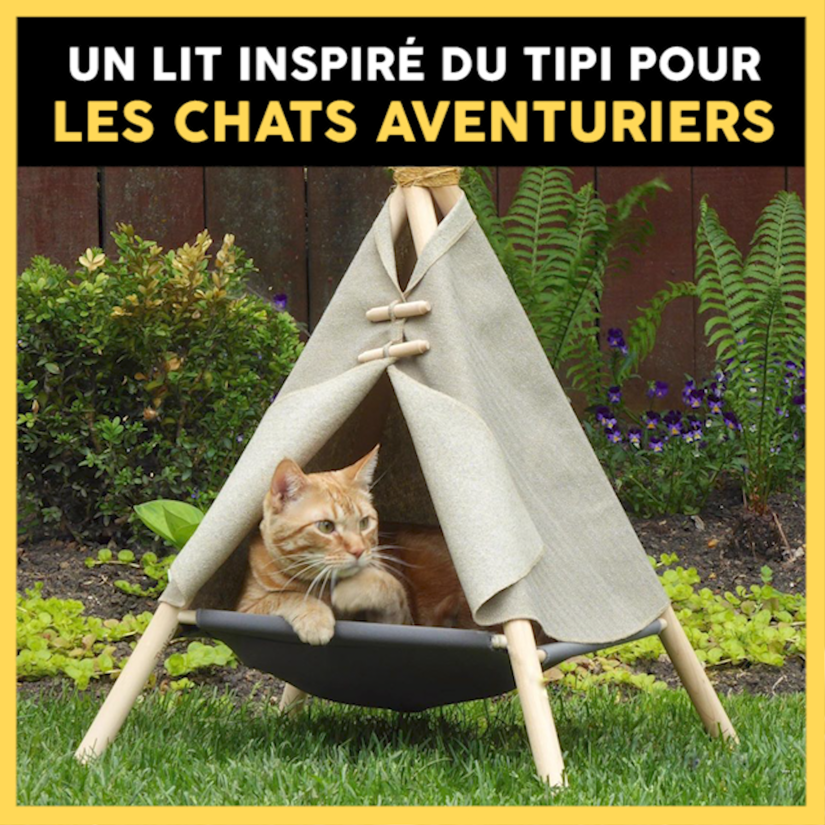 Pour les chats aventuriers, cette société commercialise des lits en forme de petits tipis