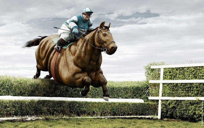 На лошадях за марихуану питательная среда для конопли