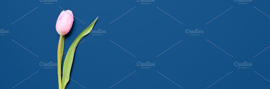 Banner of tulip on classic blue by Kate Molchanova  #design #creativemarket #background #creative #dyi #easy #trendy #modern #classicblue #classic #blue #coloroftheyear #pantone #2020 #tulip #flower #pantone2020 Banner of tulip on classic blue by Kate Molchanova  #design #creativemarket #background #creative #dyi #easy #trendy #modern #classicblue #classic #blue #coloroftheyear #pantone #2020 #tulip #flower #pantone2020