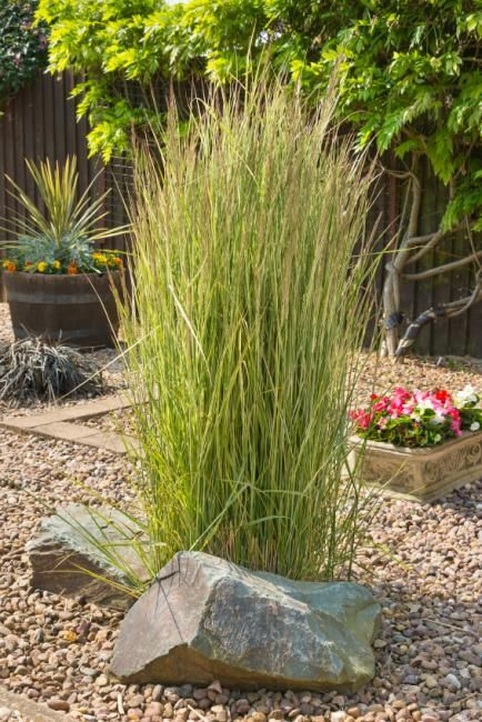 Ornamental grass landscape ideas grasses yards and gardens tall single grass clump workwithnaturefo