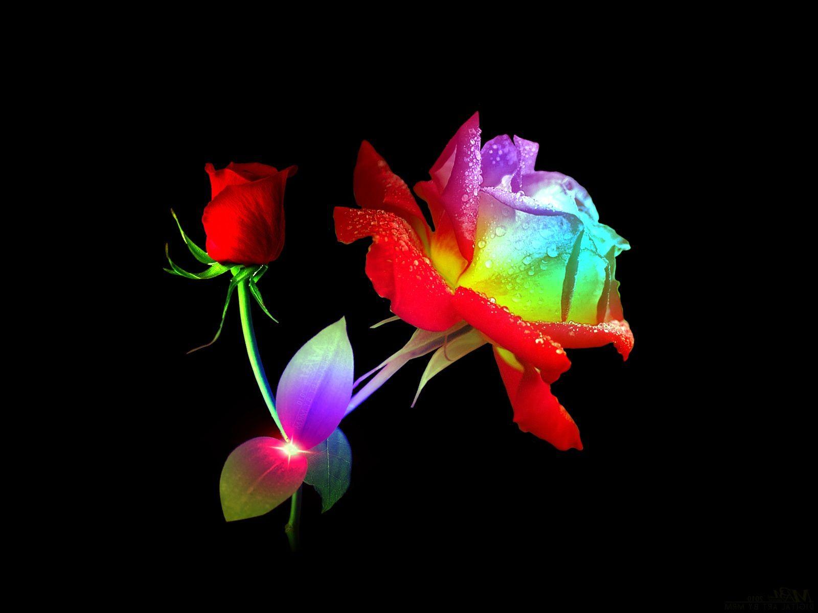 Beautiful Blues Purple Rose Rainbow Rose 3d Abstract Art Beautiful Black Blue Cg Cute Flower Wallpaper Rainbow Roses Colorful Roses