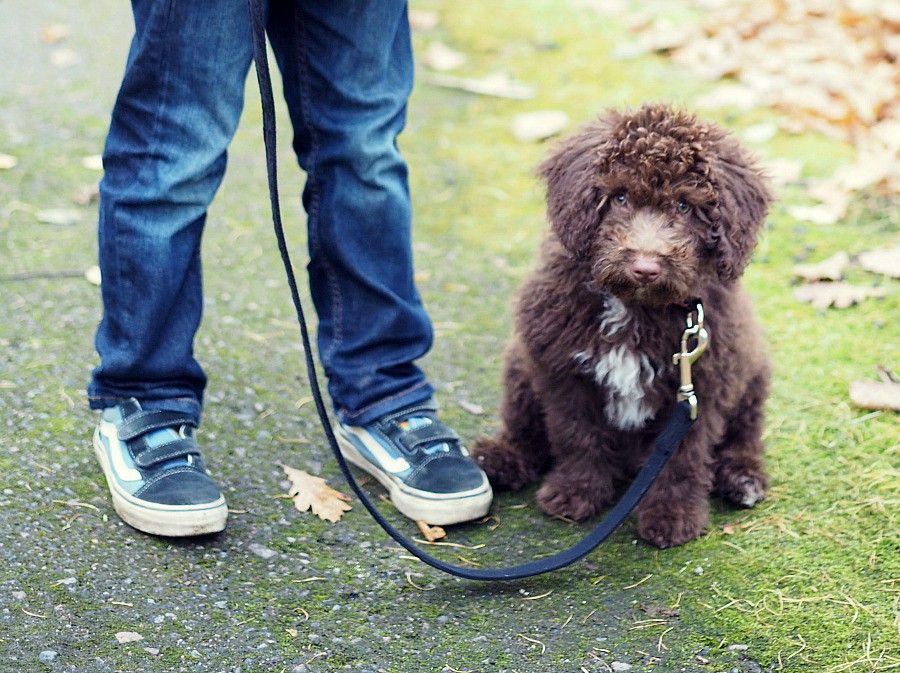 baby perro sporting our Wäinö leash and Alma collar hidden under all the fluff <3