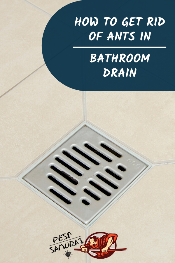How To Get Rid Of Ants In Bathroom Drain A Complete Guide In 2020 Rid Of Ants Get Rid Of Ants How To Get Rid