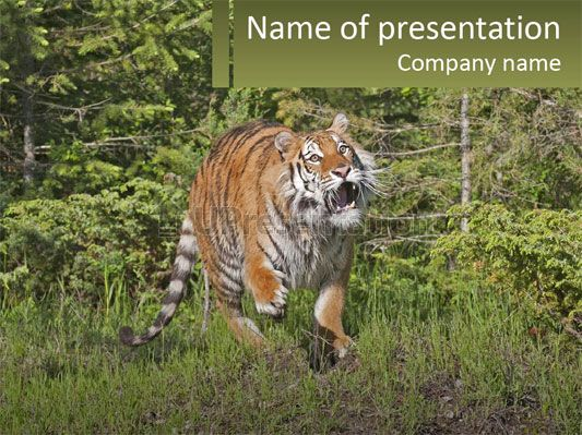 profile hungry jungle powerpoint template free templates for