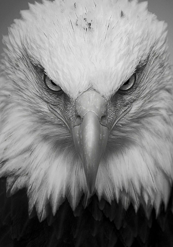 eagle by Robert C on 500px