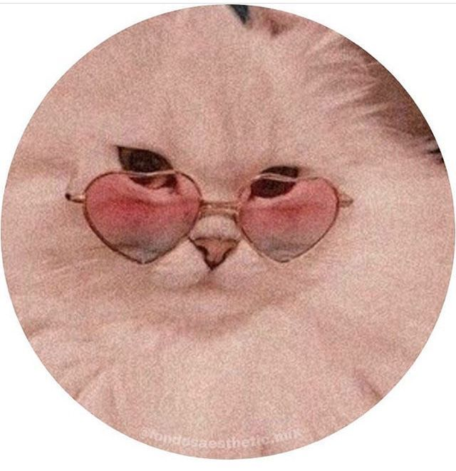 Fondos/iconos✨ - Iconos de gatos graciosos🐱