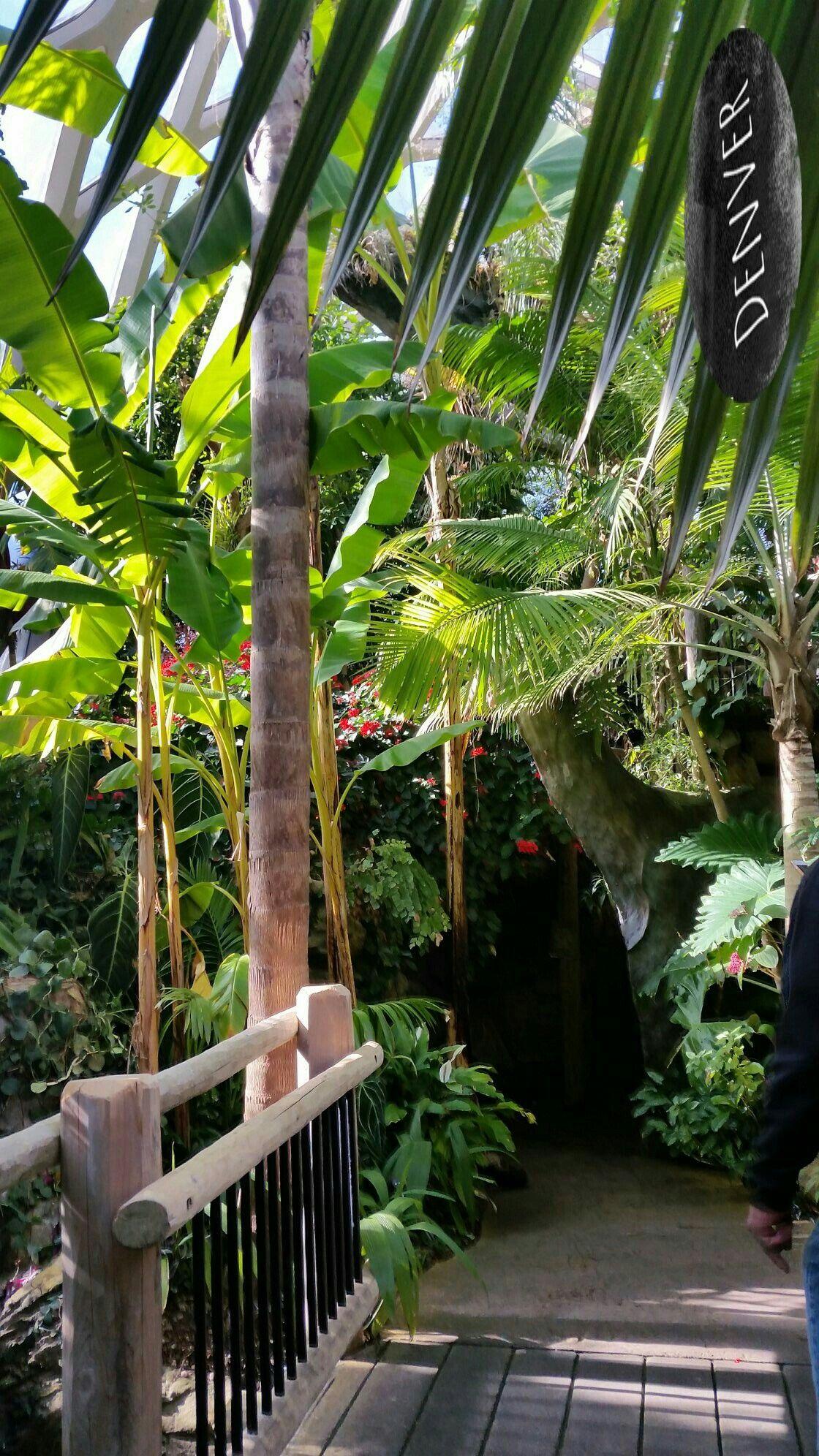 Lush Tropical Gardens under the dome at The Denver Botanical