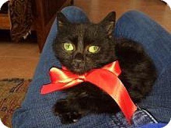 Espanola, NM - Domestic Mediumhair. Meet Scout, a kitten for adoption. http://www.adoptapet.com/pet/14580456-espanola-new-mexico-kitten