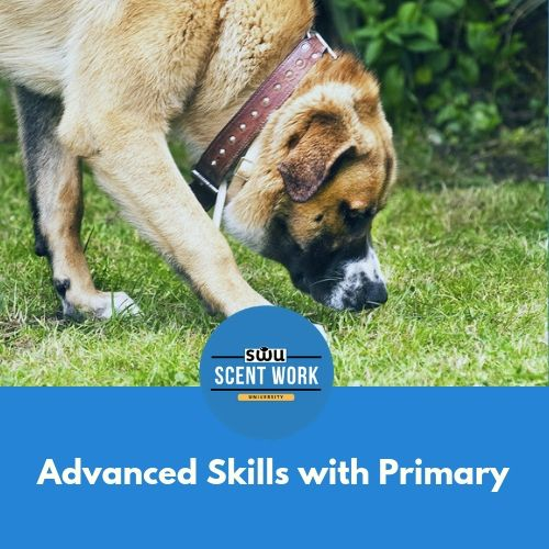 Your Dog Is Rocking Their Scent Work Training They Can Hunt For