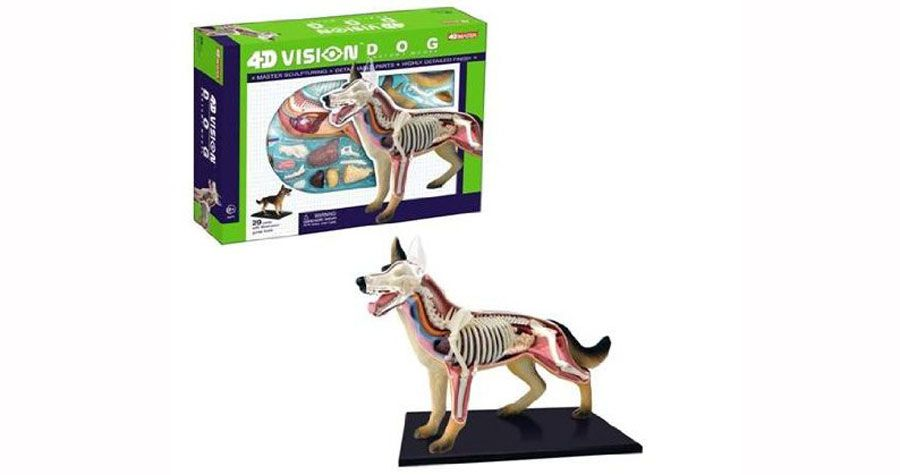 4D Vision Dog Anatomy Model and over 7,500 other quality toys at Fat ...