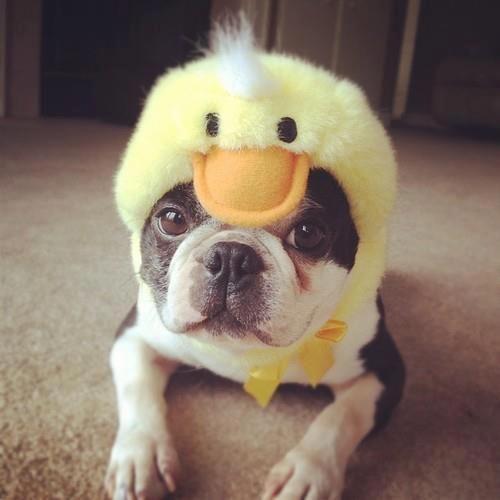 Duckyyyyy