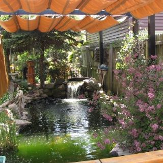 Our koi pond great idea for keeping the pond shaded to for Pond shade ideas