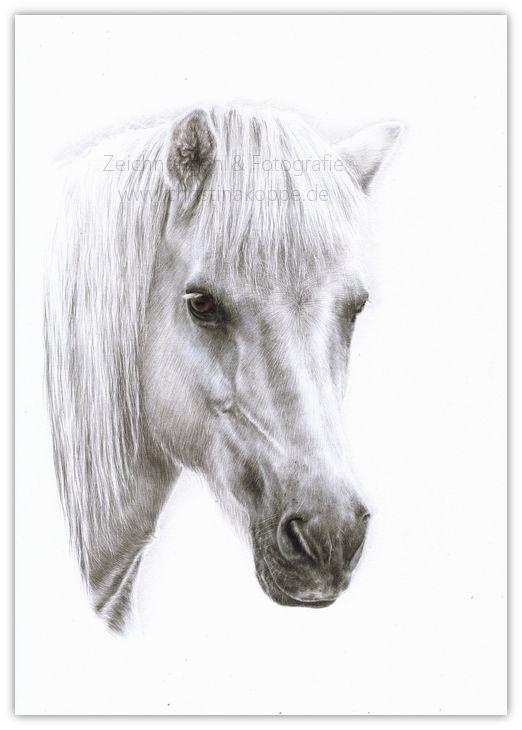 pferde bilder gezeichnet  ausmalbilder